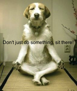 yoga-dog
